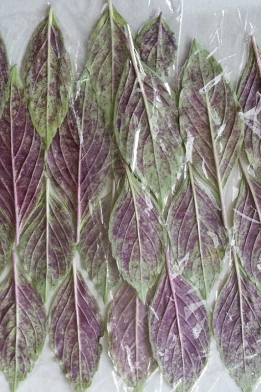 葉裏の紫が特徴的