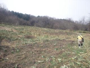 うずまきトゥルシー園開墾3