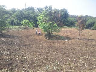 うずまきトゥルシー園開墾4